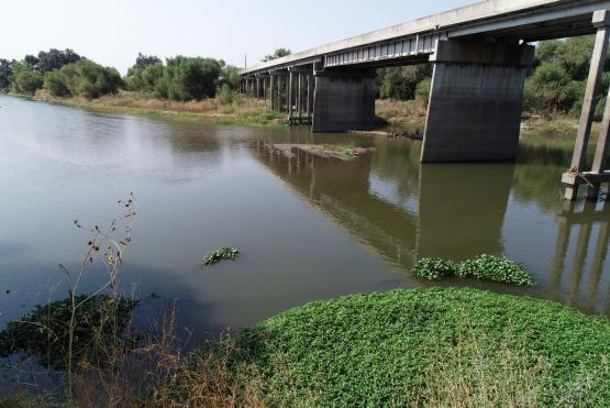 River view under Crows Landing Bridge